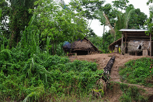 Jungle Amazonienne Perou
